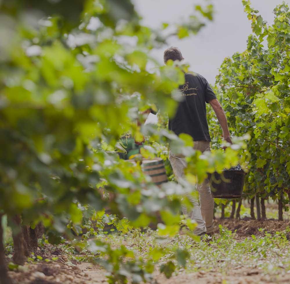 Focus : qui sont les vignerons Pays d'Oc ?